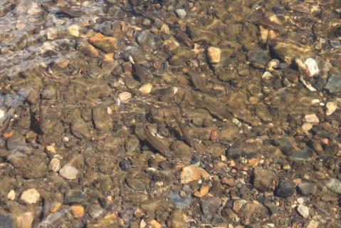 Чистая вода в Агидель